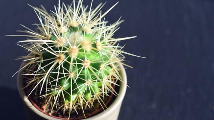 3 plantas que necesitan pocos cuidados