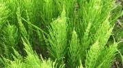 Plantas resistentes para los más descuidados