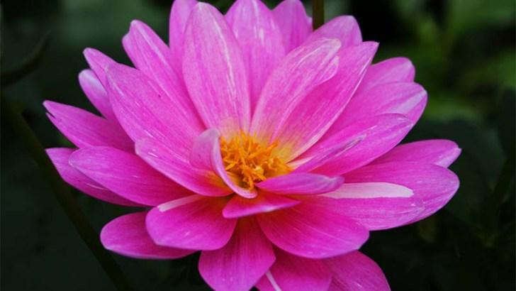 Las flores comestibles