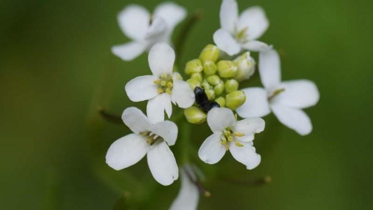 fecundacion-plantas