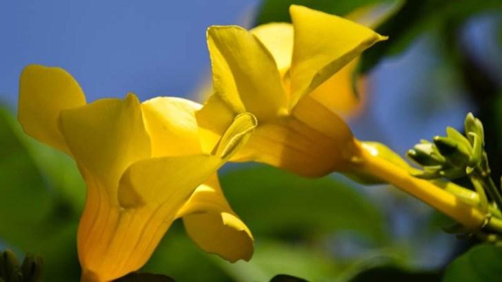 Ideas de plantas para tu jardín