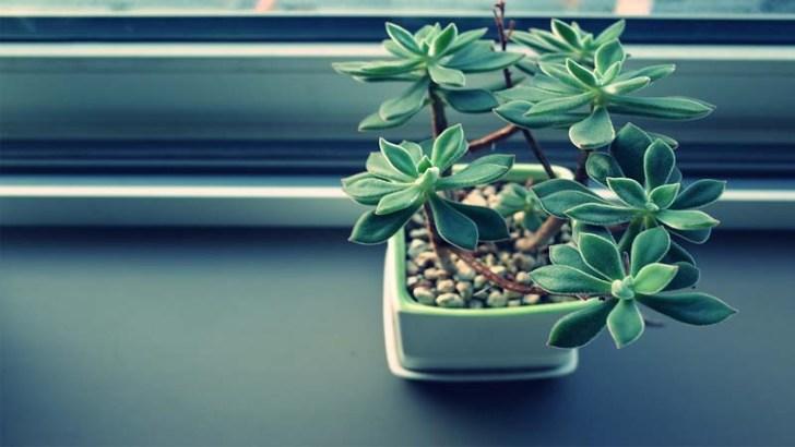 Las plantas pueden mejorar el ambiente de trabajo
