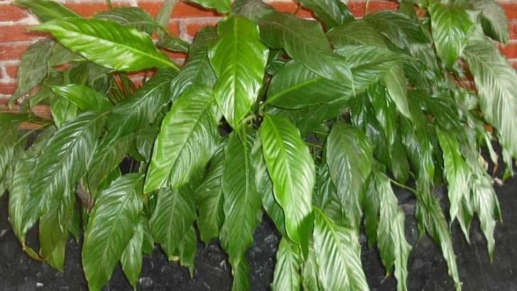 Plantas que absorben la humedad del aire
