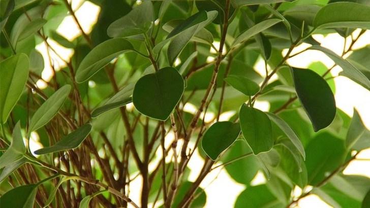 Plantas que humedecen el ambiente