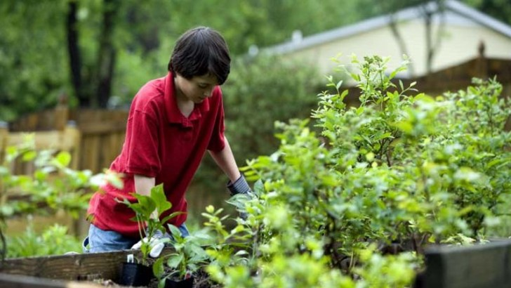 Consejos para el jardín en junio