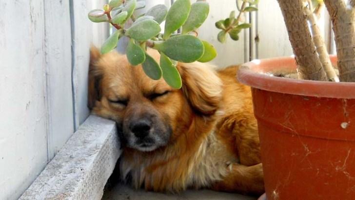 Plantas peligrosas para los perros