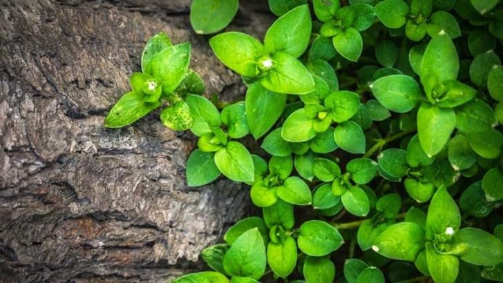La vida social de las plantas