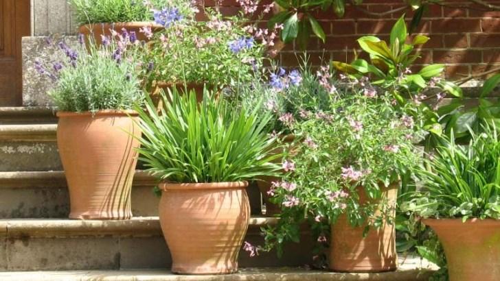 Las plantas y la luz natural