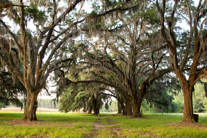 THE PINELAND PLANTATION 800 Acres Hampton County South