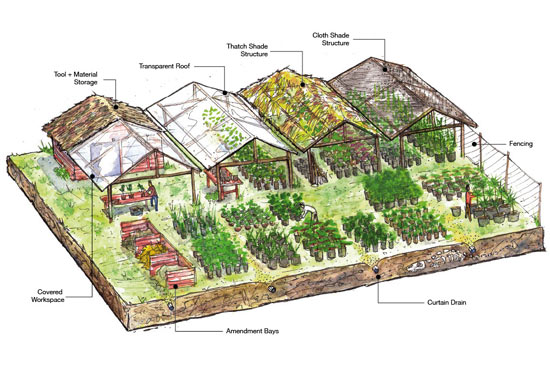 Under natural forest has negligible scope, while trees outside forests (tofs). Nursery Setup