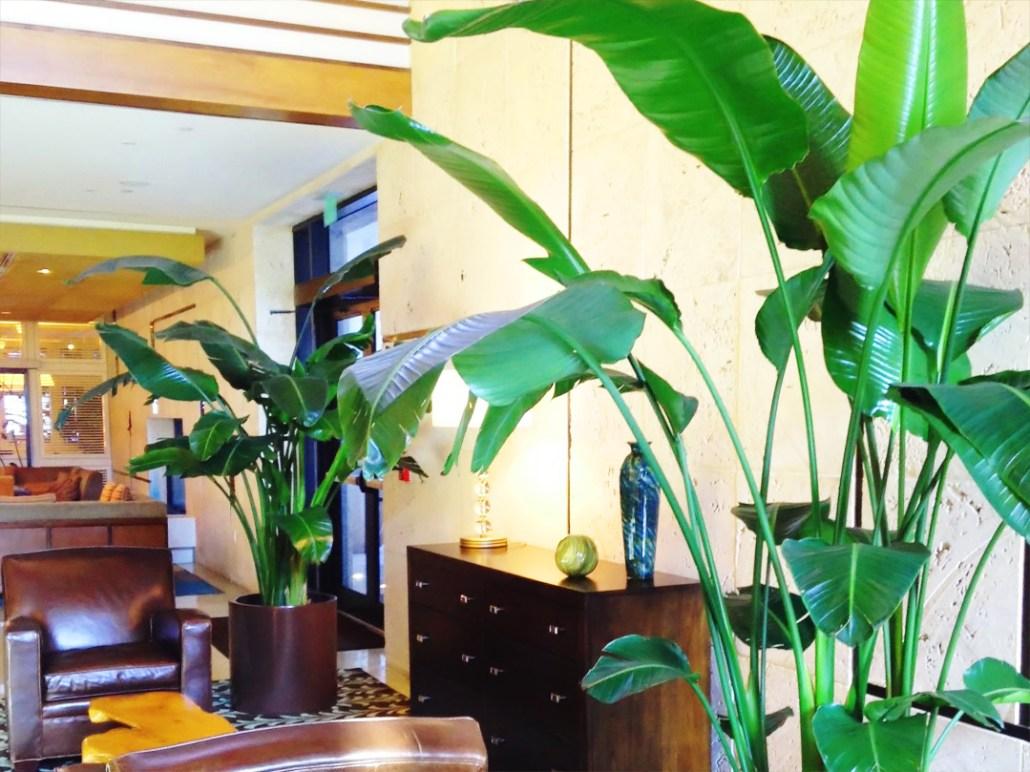 indoor-plant-lobby
