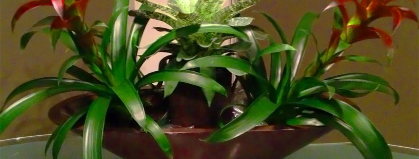 indoor-plants-bromeliad-arrangement