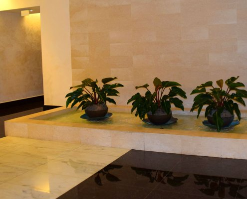 office-plants-for-commercial-businesses-04