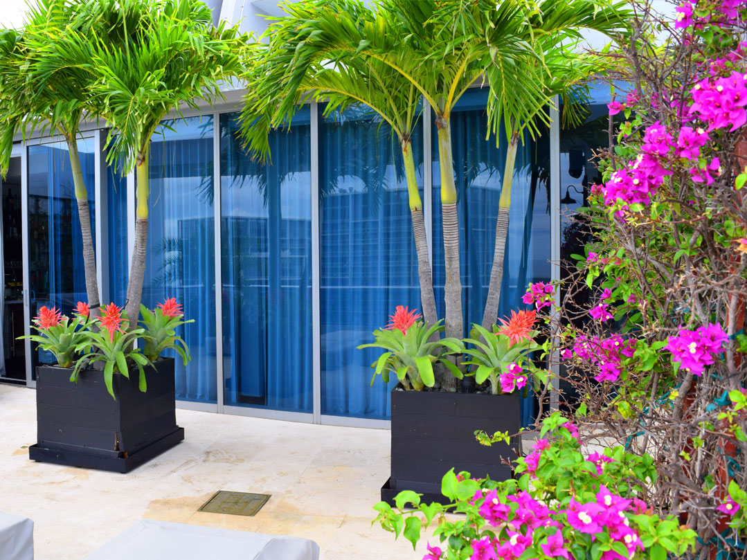 ... Office Plants For Commercial Businesses 04 ...