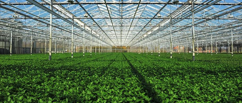 planten online bestellen plantcentraal homepage banner planten van de kweker kopen