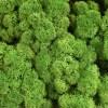 rendiermos woudgroen 4kg