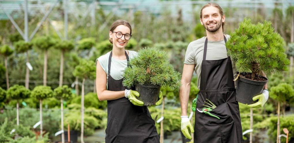 planten kwekerij