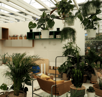 Plants, quietly doing what they are meant to do, creating better living spaces, cleaning the air, transforming rooms