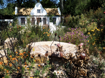 The harsh fynbos landscape celebrated by Jonathan Snow in the Trailfinders Garden