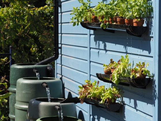 Cascading water buts at the RHS Grow Your Own Garden with The Raymond Blanc Gardening School