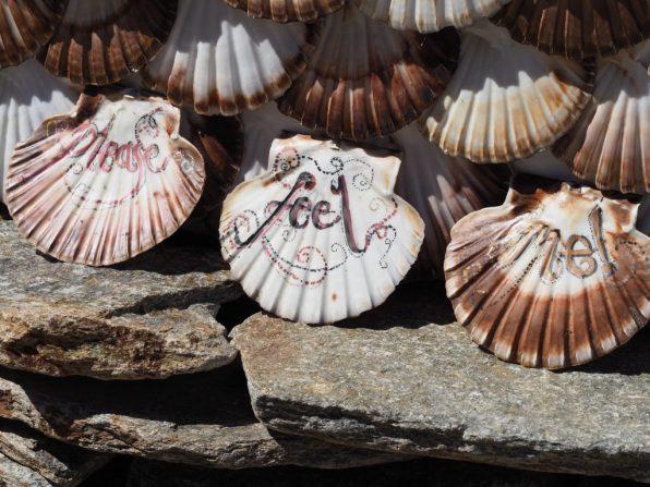 Shells make amazing tactile fences