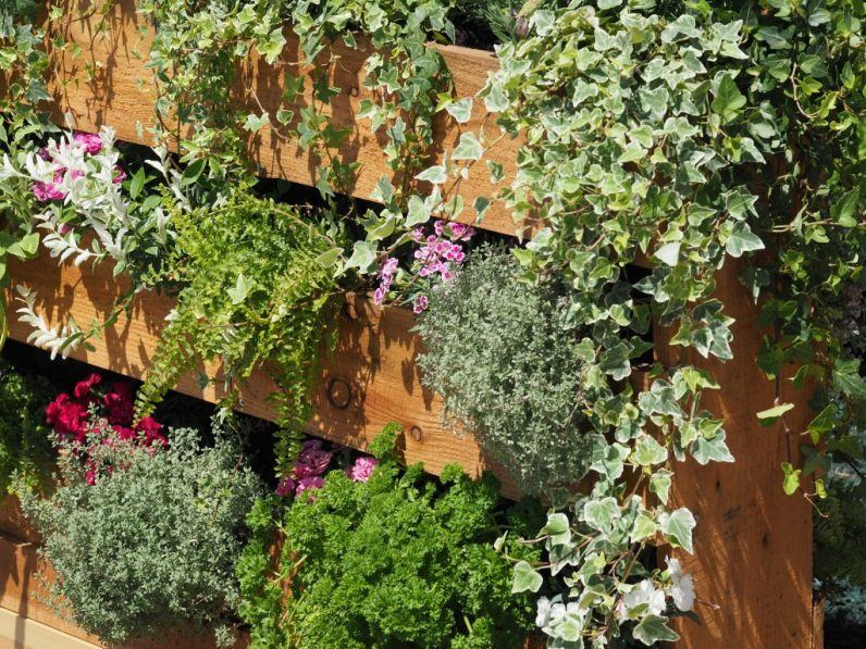 Planting pallets has been taken to the next level. here with a wonderful living fence...