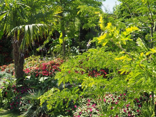 Dense, lush, tropical planting in the stunning The B&Q Bursting Busy Lizzie Garden
