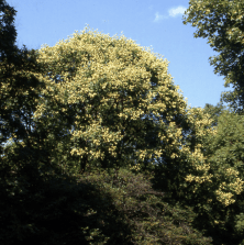 An image taken 25 years ago, when we first met at The Arnold Arboretum, just look at her...