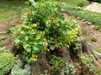 What to Do with Tree Stumps in the Garden