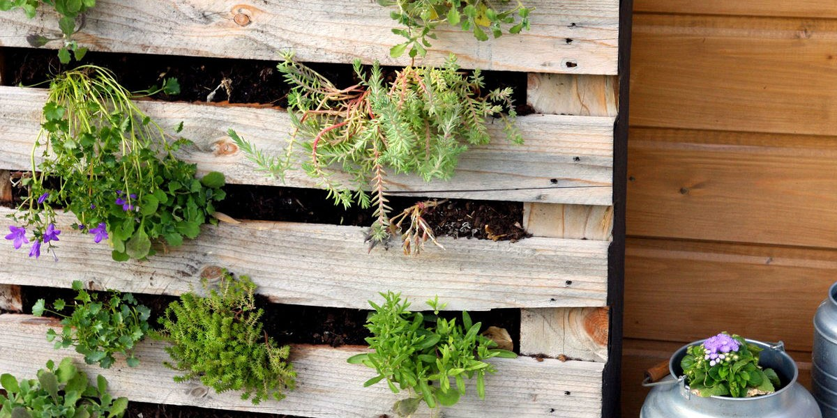 un mur vegetal avec une palette