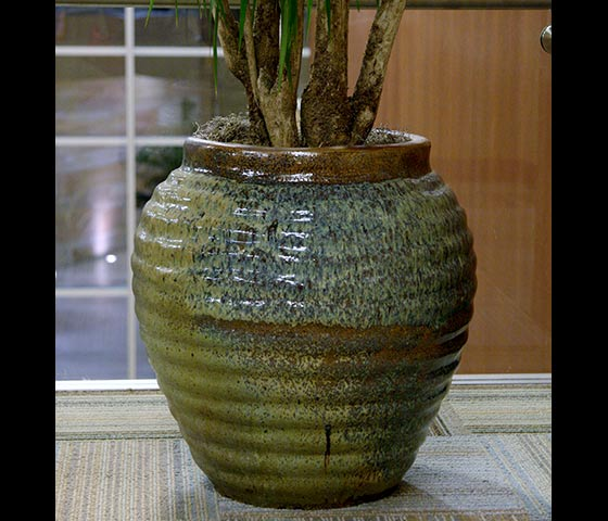 Decorative Containers Office Plants Indoor House Plants And Patio