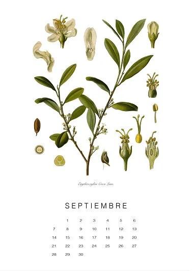 calendario-planthae9