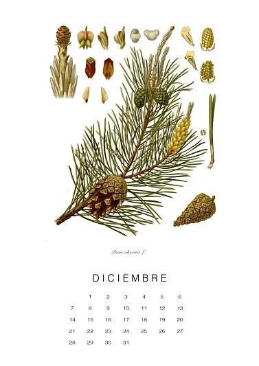 calendario-planthae12