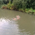 schoonzwemmers