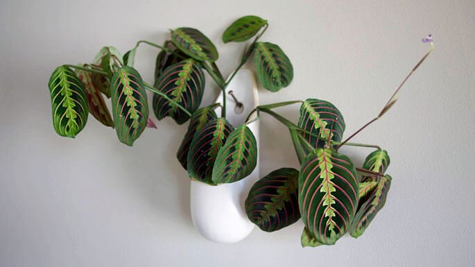Water Based House Plants