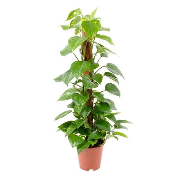 Kamerplanten  Plantjenl  Cadeaus Online Kopen