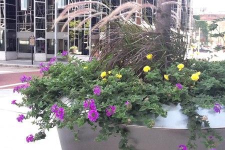 Vining Summer Annuals