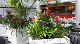 food court plant maintenance