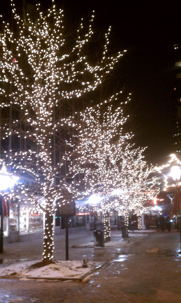 large trees with christmas lights