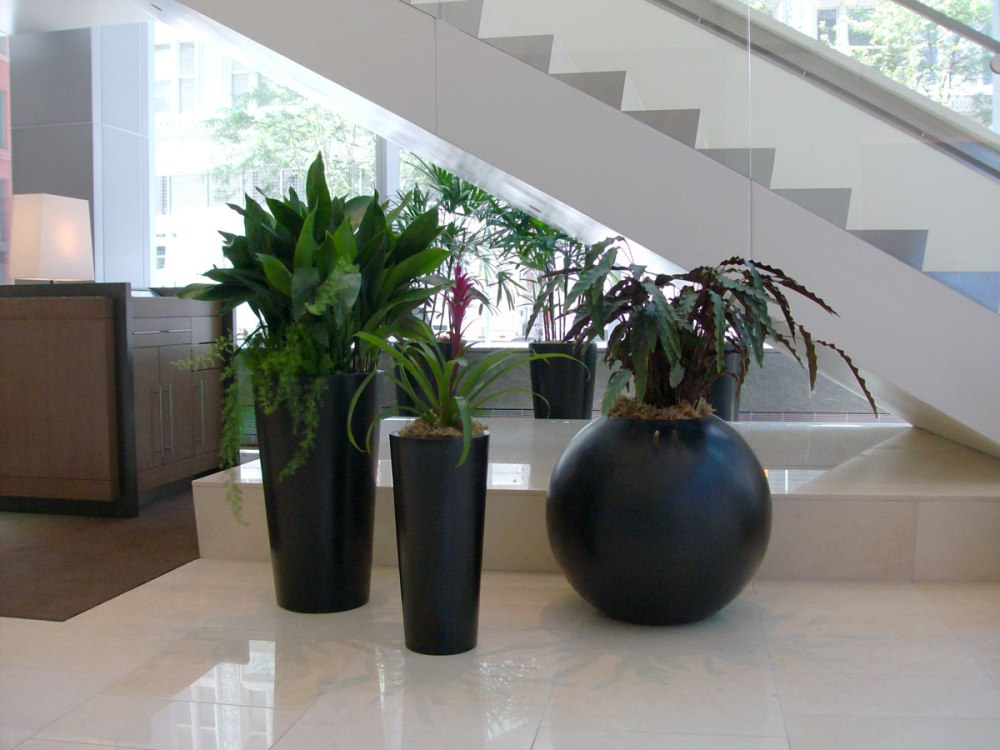 interior plant maintenance