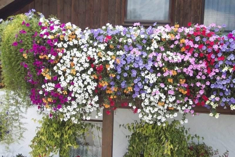Grtnerei Hbner  Balkon