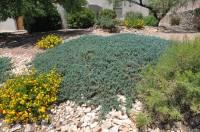juniper blue rug | Roselawnlutheran