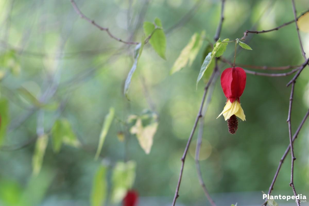 Two Flowering Plants