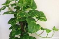 Best indoor plants low light, low light houseplants ...