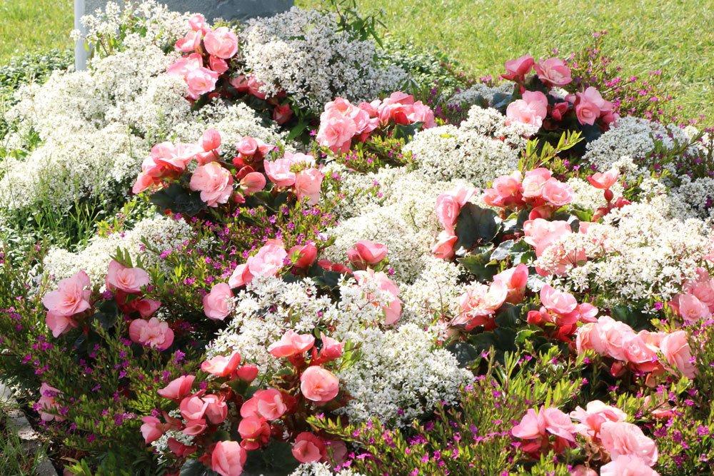 Grabbepflanzung im Herbst  Ideen fr alle Standorte und