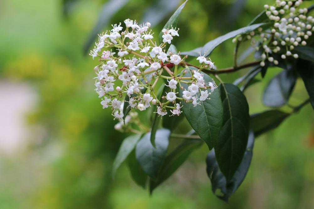 Balkonpflanzen im Herbst  30 Blumen fr August September