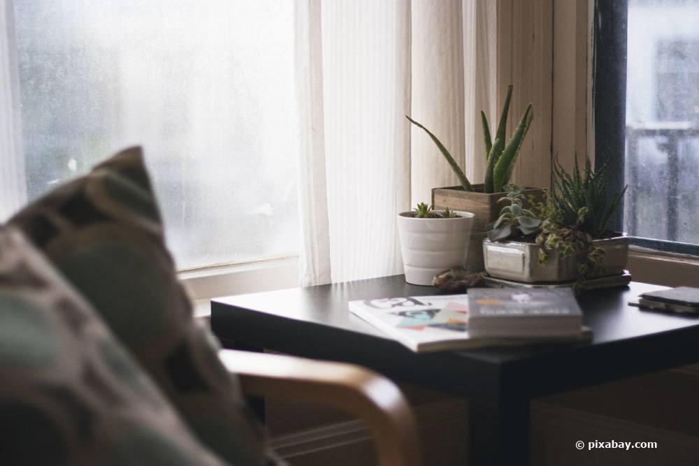 Gesunde Schlafzimmerpflanzen 18 ideale Pflanzen frs Schlafzimmer