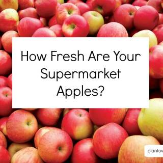 How Fresh Are Your Supermarket Apples?