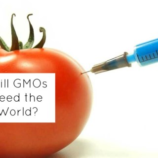 Will GMOs Feed The World?