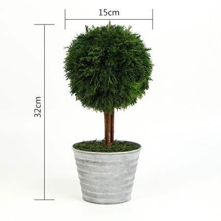 size of preserved ball topiary